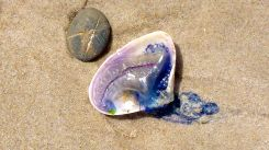 shell-and-rock